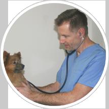 Rabatterad seniorhälsokontroll för hund och katt